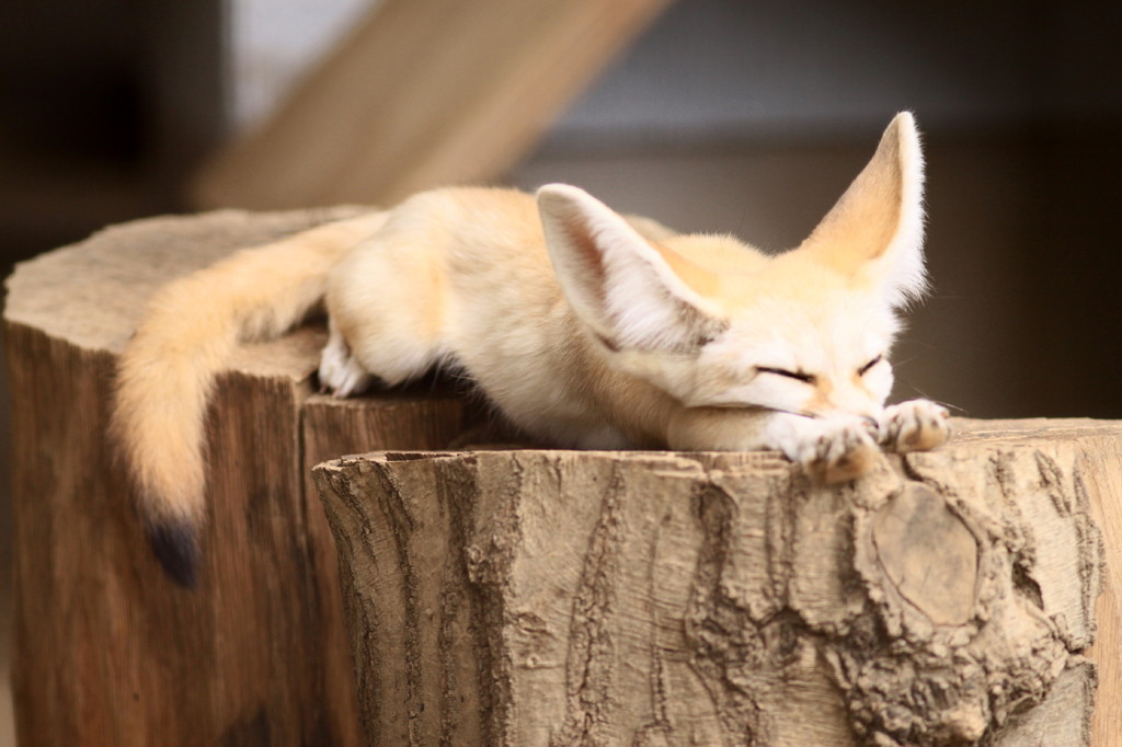 あっあ~背筋が伸びて気持いい熟睡中~!