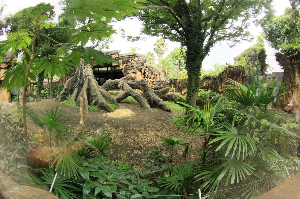 ゴリラ庭園