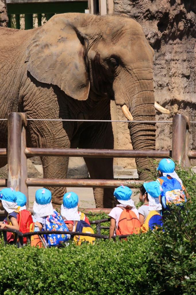 『象さ~ん!』子供達の人気者(^^♪