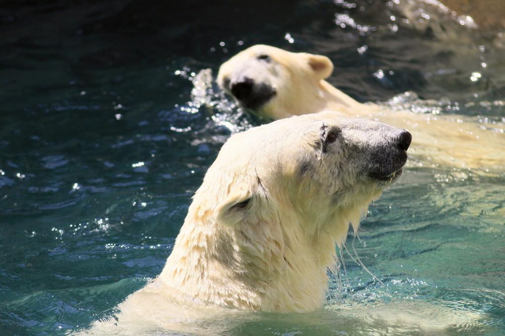 一緒に泳がないか~今日は暑かったね(^_-)