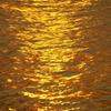 黄金の波紋