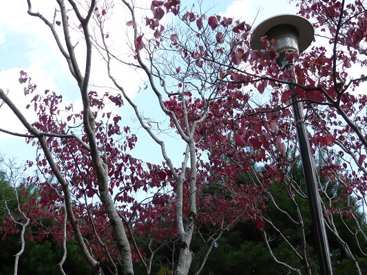街灯と赤い木