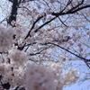 甚六桜_6