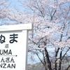 甚六桜_3