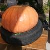 タイヤかぼちゃ?