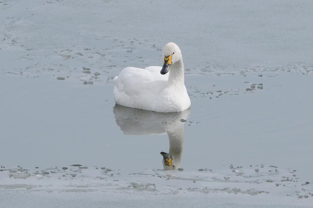 湖面静かに