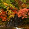 もみじ山~秋真っ盛り