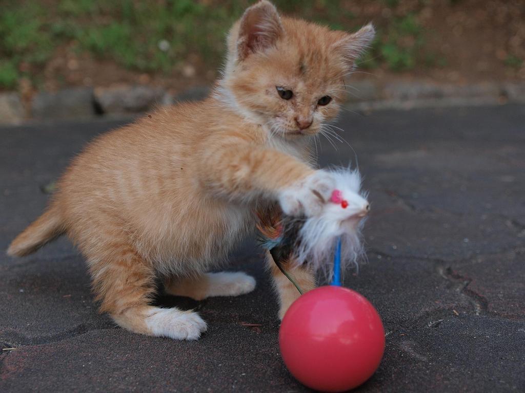 猫じゃらしと格闘中 ♪