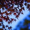 2010 紅葉狩り ~赤と青~