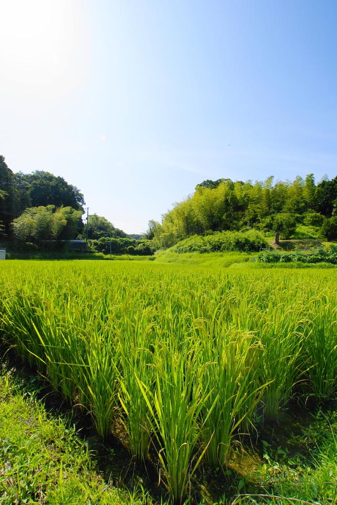 田園 -夏-