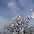 PENTAX PENTAX K20Dで撮影した風景(冬咲くこぶし)の写真(画像)