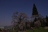 高山村 桜めぐり