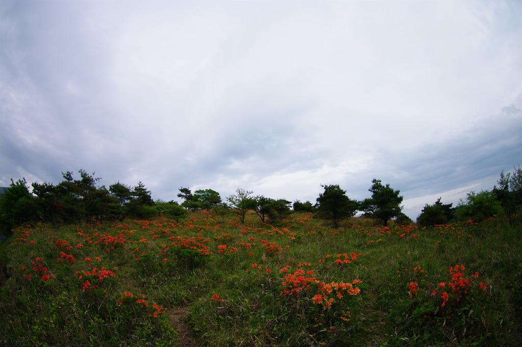 レンゲツツジの咲く山