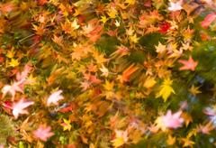 水中の紅葉