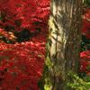 秋の陽光Ⅱ