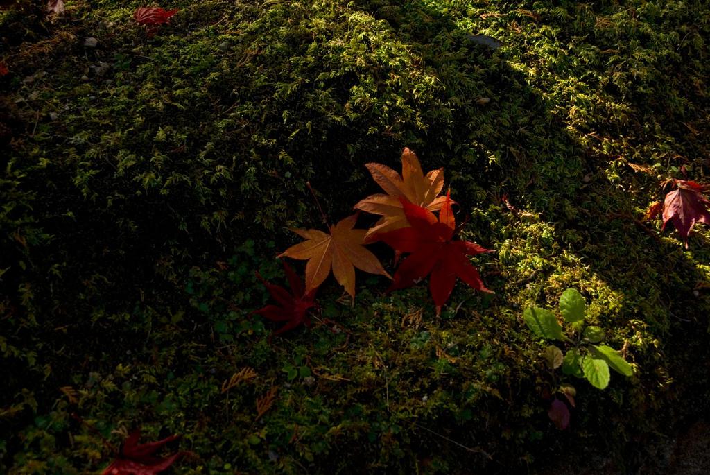 秋の陽光Ⅲ