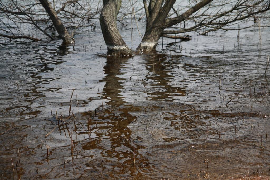 琵琶湖の水紋