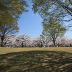 CANON Canon EOS Kiss X2で撮影した風景(桜紋様)の写真(画像)