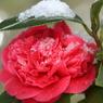 CANON Canon EOS Kiss X2で撮影した植物(朱に交われば赤くなるにけり)の写真(画像)