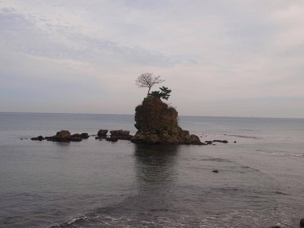 潮風に耐える一本の木