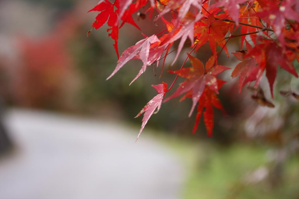 まだまだ紅葉
