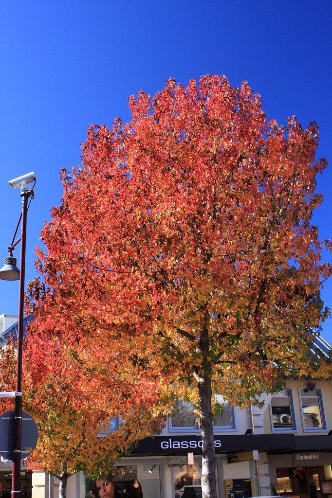 クイーンズタウンの秋