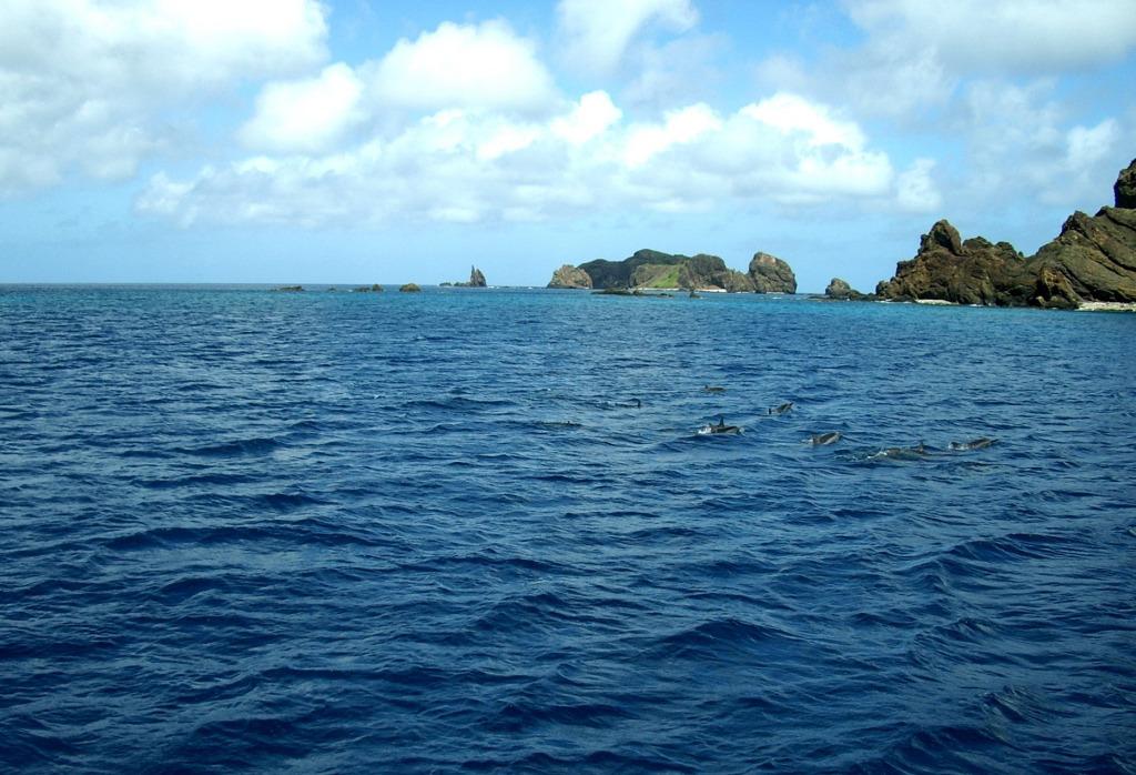 ハシナガイルカの群れ