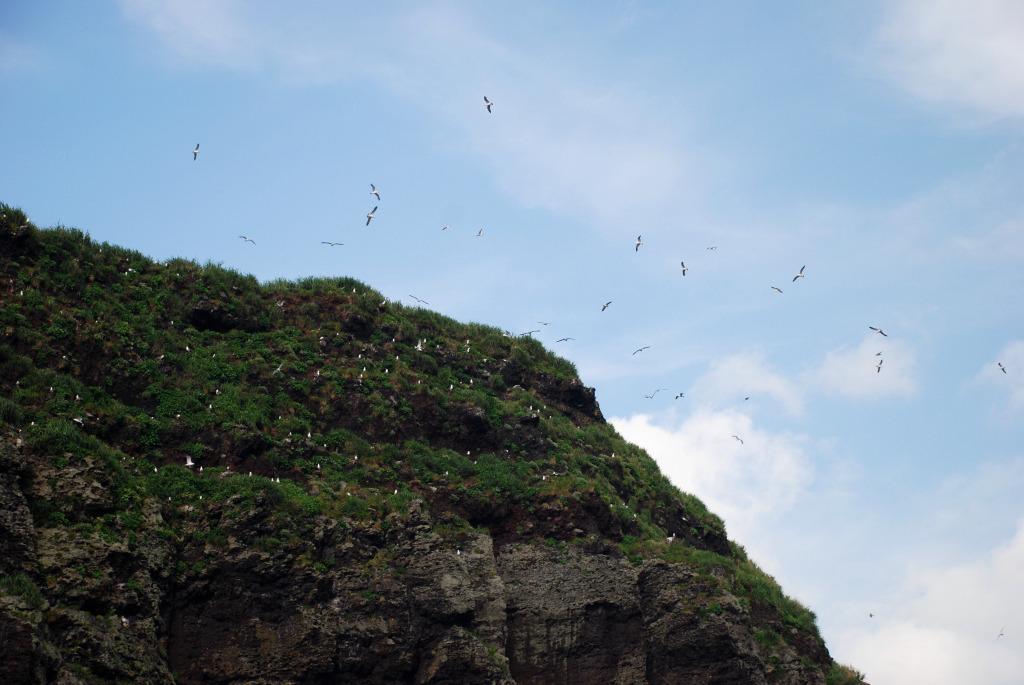 コジネの海鳥 #2