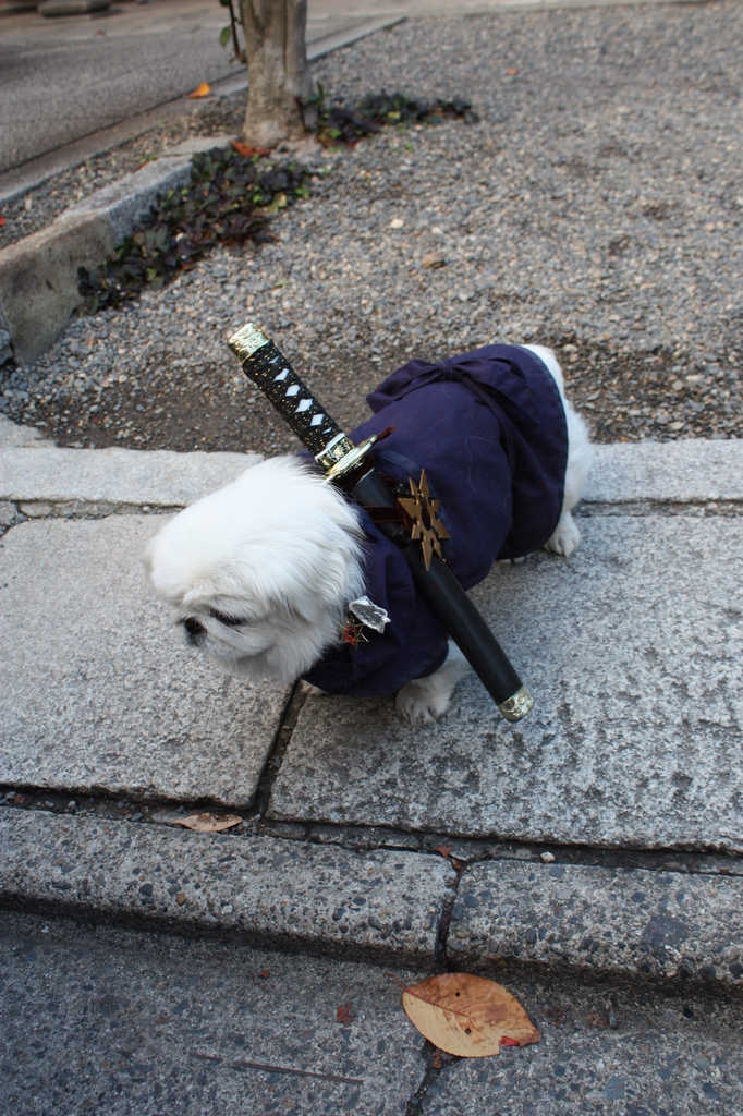 武士の散歩
