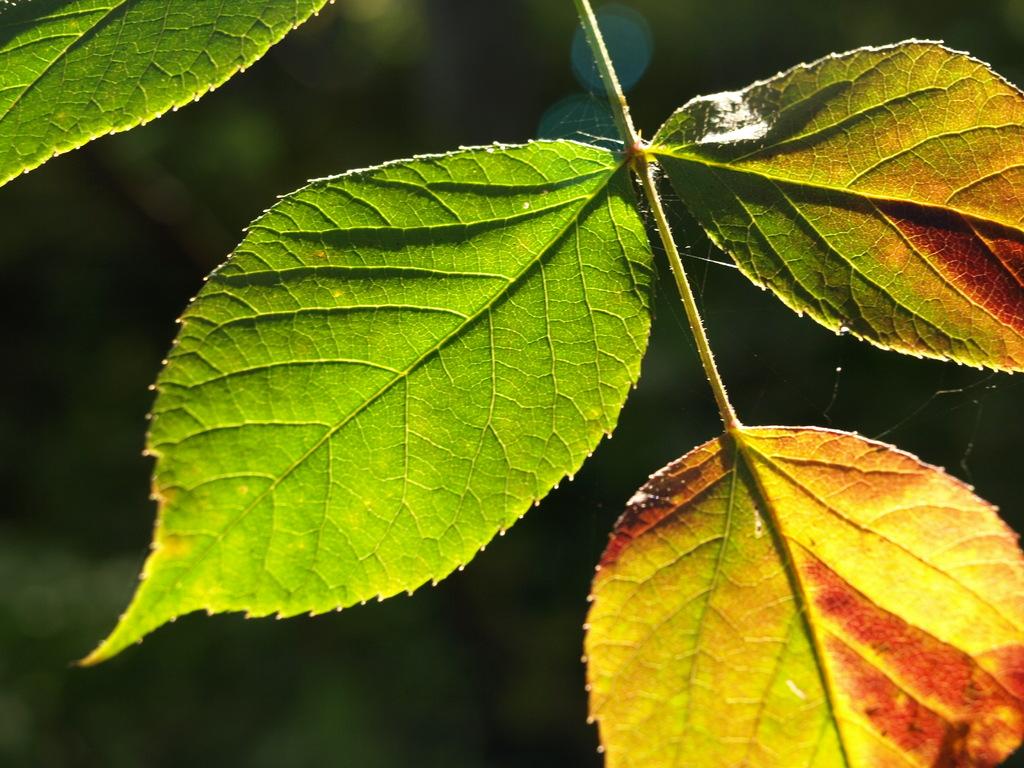 信州飯綱高原の秋