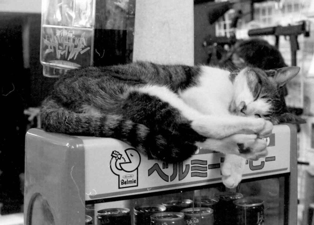 ベルミー猫