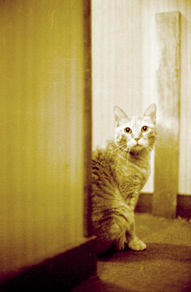 岡部の家の猫
