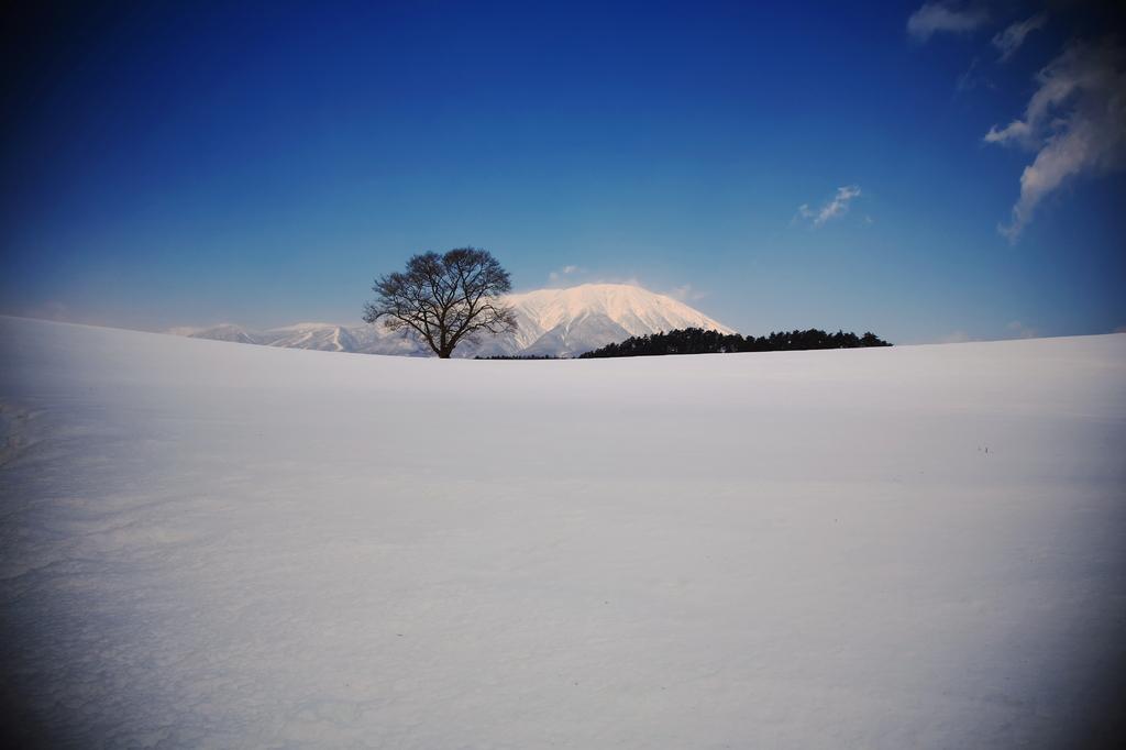 一本桜・・・冬