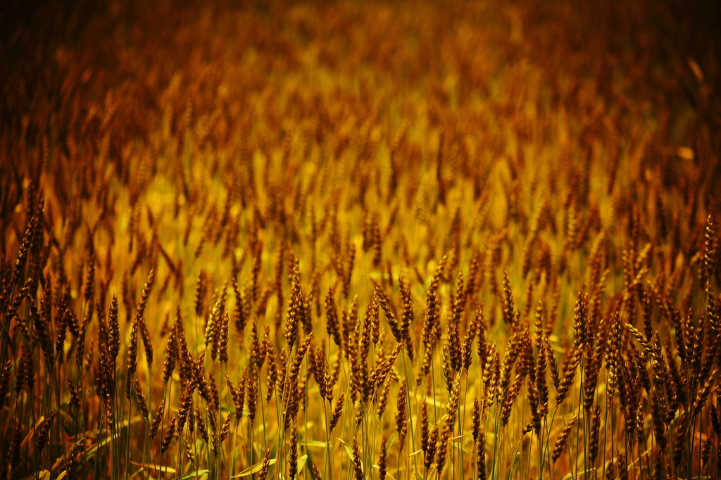 ~麦~ わんぱくでもいい、たくましく育ってほしい。。。