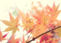 CANON Canon EOS 7D Mark IIで撮影した(Tender Autumn)の写真(画像)