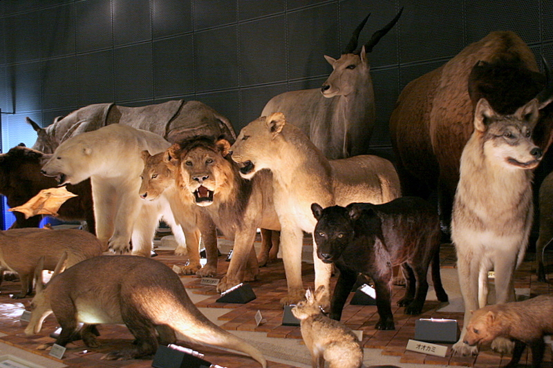 The stuffed animals of the museum
