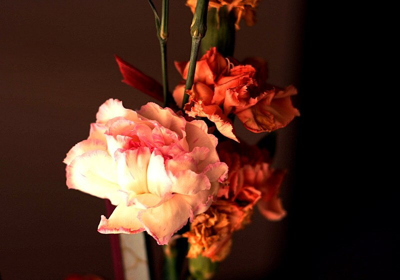 dry_flower