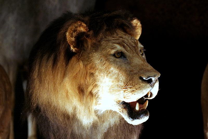 The stuffed animals of LION