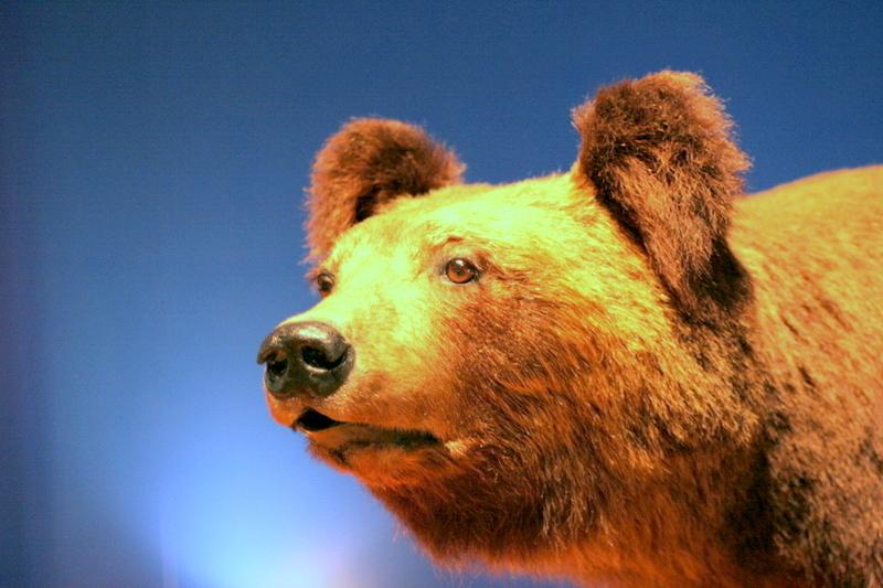 A stuffed animal BEAR