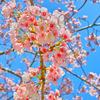 春弥生ふびり残され花に舞う