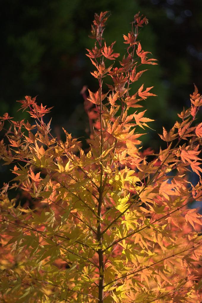 しのびくる『秋』