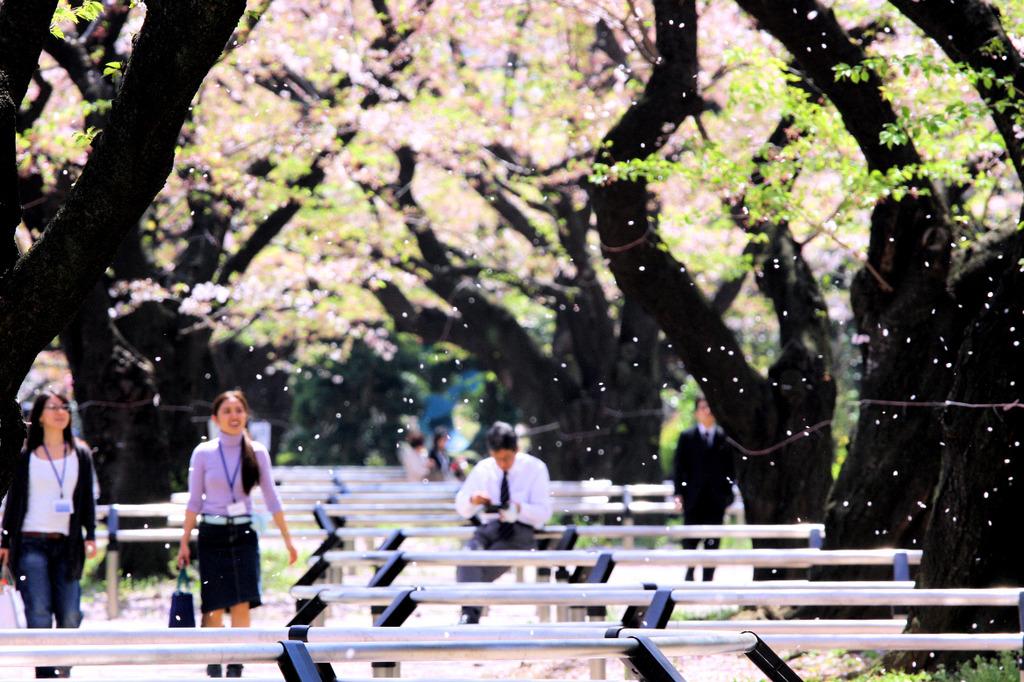 桜舞い散る公園