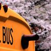 SCHOOL BUS & CHERRY BLOSSAM