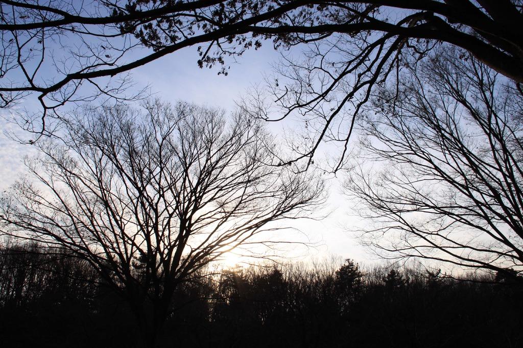 森の夕焼け
