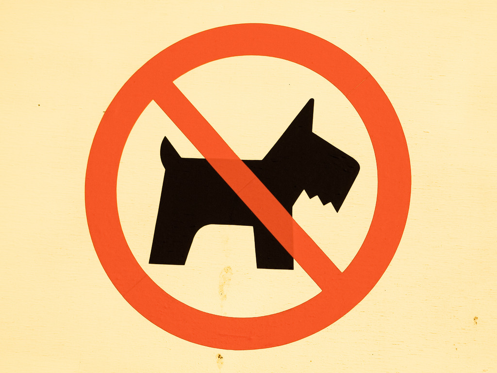 DOGS  NO  ENTRY