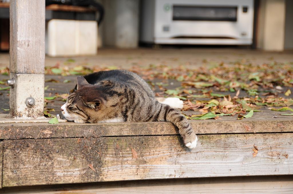 新宿御苑のネコ