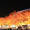 紅葉のドーム