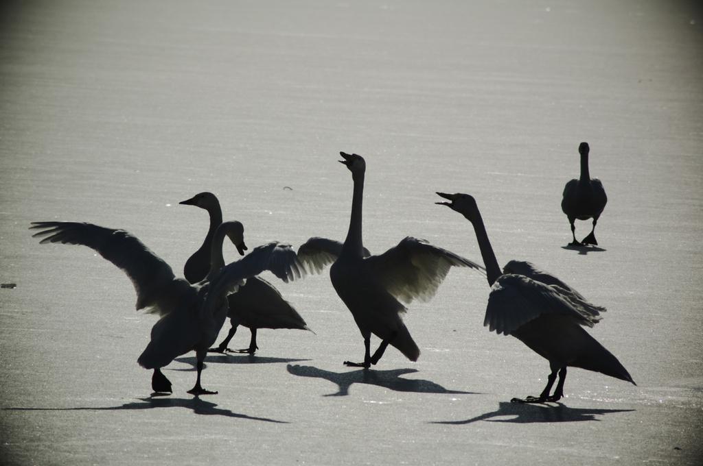 冬鳥の舞い