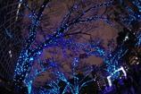 OSAKA 光のルネサンス