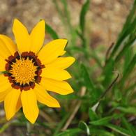 NIKON NIKON D60で撮影した植物(鮮明)の写真(画像)
